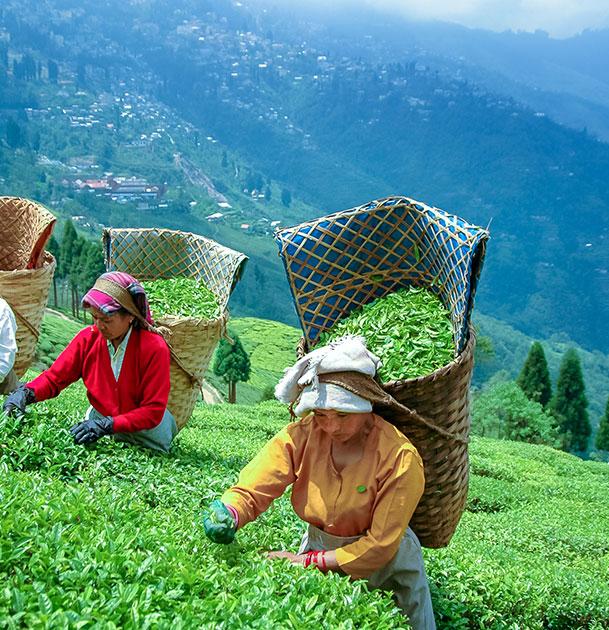 Tea, Coffee & Spices