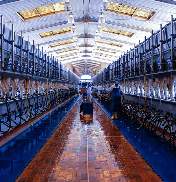 Food Processing & Dairy